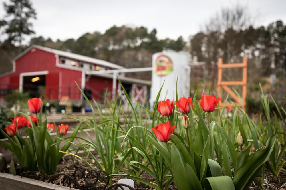 Harvest Farm at White Street Park. Harvest Park New Homes in Suwanee, GA